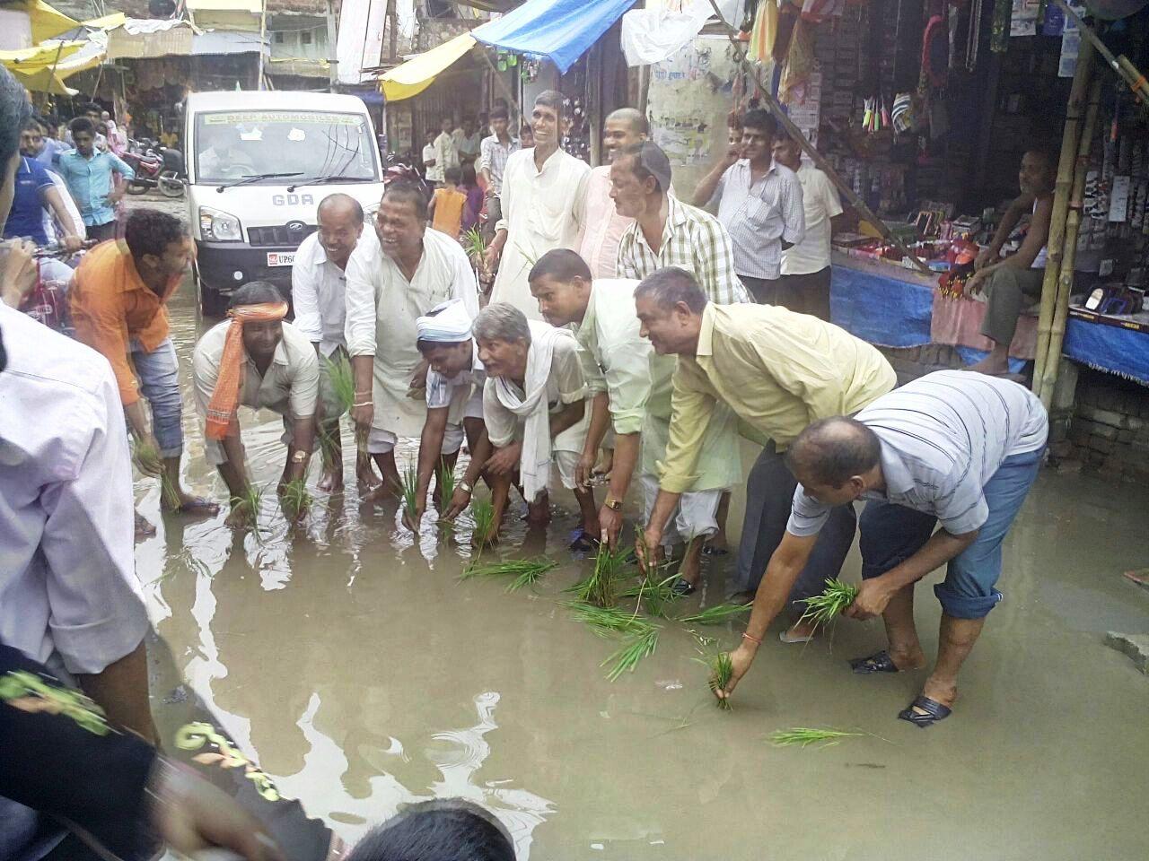 जल्पा मंदिर के सामने सड़क पर जलजमाव में धान रोप कर विरोध जताते भाजपाई